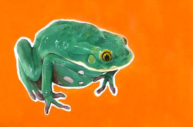 Tesch Frog